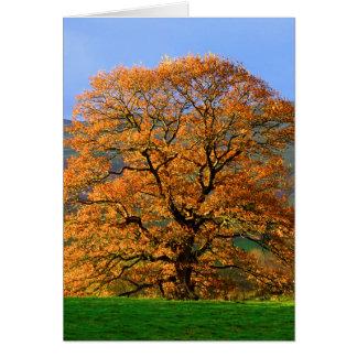 Cartão Howgillhounds carda a cor do outono