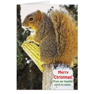 Cartão Humor/esquilo do Natal no registro com espiga de