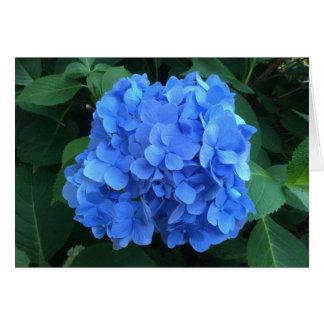 Cartão HYDRANGEA tão azul & verde -