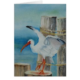 Cartão Íbis brancos por Peggy Allen