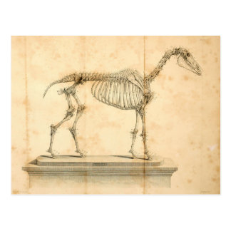 Cartão II da anatomia do cavalo