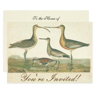 Cartão Ilustração antiga do pântano dos pássaros de água