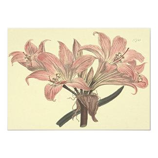 Cartão Ilustração botânica cor-de-rosa do lírio de