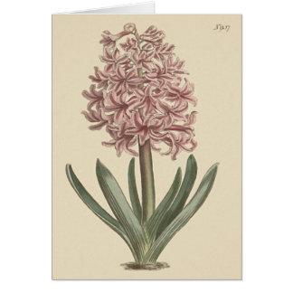 Cartão Ilustração botânica do jacinto do jardim