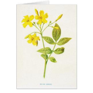Cartão Ilustração botânica do vintage do jasmim amarelo