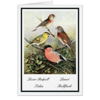Cartão Ilustração britânica dos pássaros do jardim do