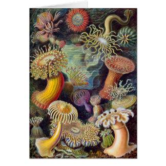 Cartão Ilustração científica das anêmonas de mar do