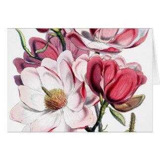 Cartão Ilustração cor-de-rosa da Botânica da flor da