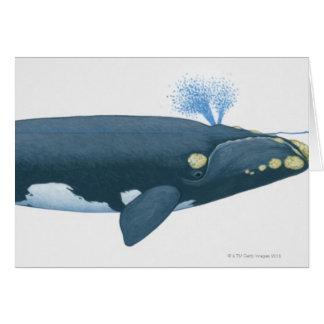 Cartão Ilustração da baleia direita de North Pacific