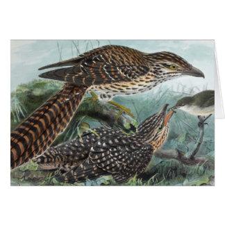 Cartão Ilustração de cauda longa do vintage dos cucos