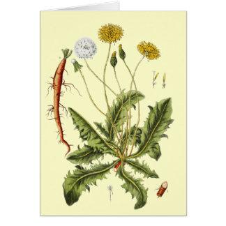 Cartão Ilustração do dente-de-leão do vintage