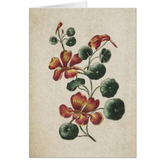Cartão Ilustração floral botânica da chagas do vintage