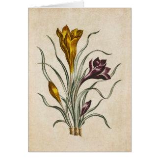 Cartão Ilustração floral botânica do açafrão do vintage