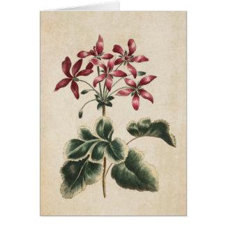 Cartão Ilustração floral botânica do gerânio do vintage