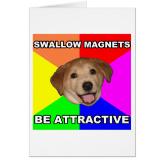 Cartão Ímãs da andorinha do cão do conselho
