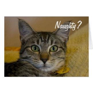 Cartão impertinente ou agradável do gato