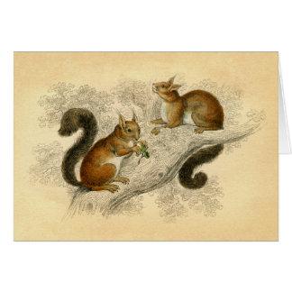 Cartão Impressão do esquilo do vintage