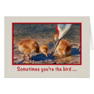Cartão Incentivo, pássaros de bebê e sem-fim