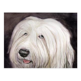 Cartão inglês velho da arte do Sheepdog