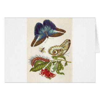 Cartão Insectorum Surinamensium da metamorfose