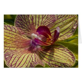 Cartão Interior de uma orquídea