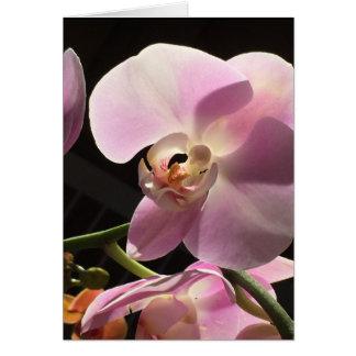 Cartão interno do vazio cor-de-rosa da orquídea