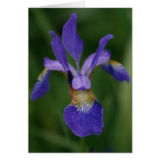 Cartão Íris azul