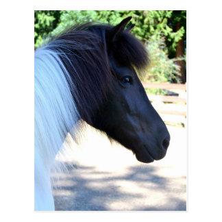 Cartão islandês do cavalo da pintura bonito