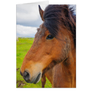 Cartão Islândia. Eyrarbakki. Cavalo islandês
