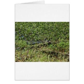 Cartão Jacaré do pântano de Louisiana em Jean Lafitte