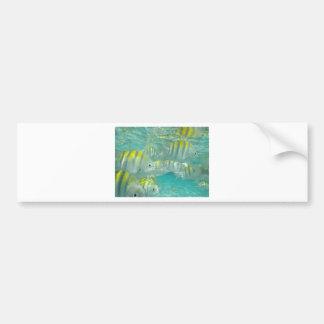 Cartão jamaicano dos peixes adesivos