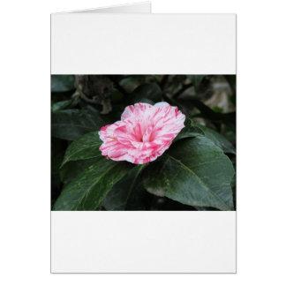 Cartão Japonica listado único vermelho da camélia da flor