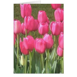 Cartão Jardim cor-de-rosa brilhante da tulipa