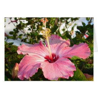 Cartão Jardim da leitura de Glebe: Hibiscus