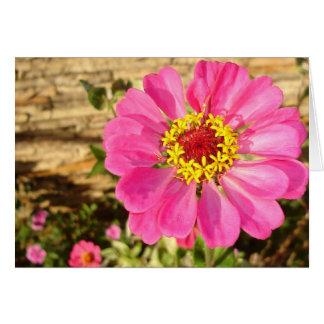 Cartão Jardim da leitura de Glebe: Zinnia brilhante
