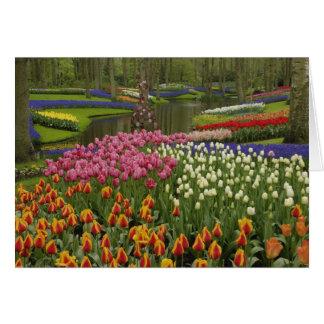 Cartão Jardim da tulipa e do jacinto, jardins de