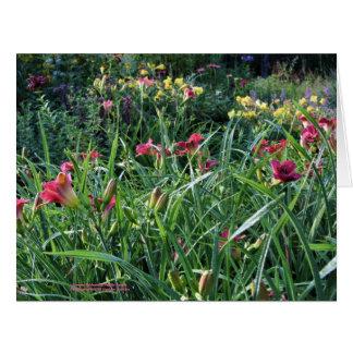 Cartão Jardim do hemerocallis de Reblooming do verão