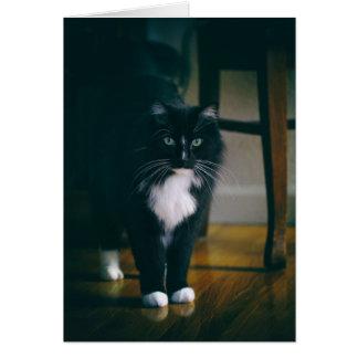 Cartão Jaspe o gato do smoking