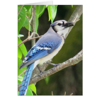 Cartão Jay azul