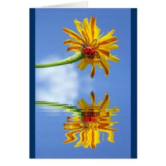 Cartão Joaninha na flor à superfície da àgua com reflexão