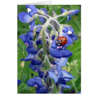 Cartão Joaninha no Bluebonnet de Texas