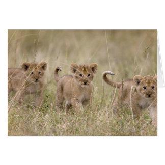Cartão 'Jogo Reserve de África, Kenya, Mara do Masai
