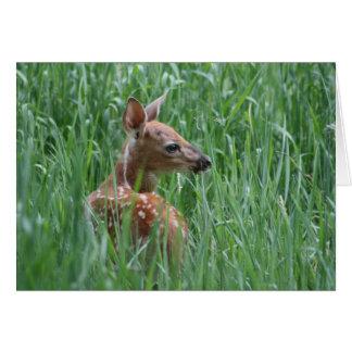 Cartão Jovem corça dos cervos de Whitetail