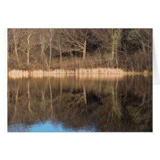 Cartão Juncos e reflexões das árvores no parque de
