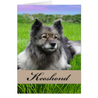 Cartão Keeshond, cão na grama, vazio para dentro