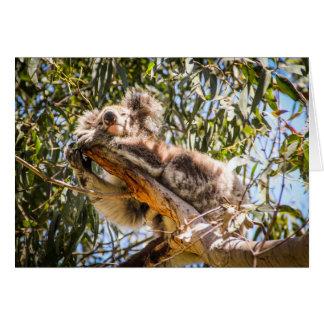 Cartão Koala de descanso