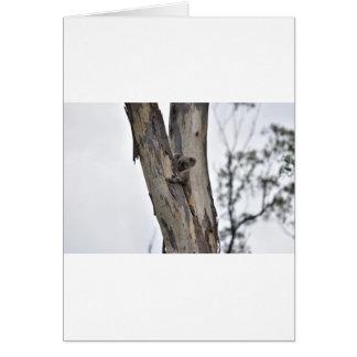 CARTÃO KOALA NA ÁRVORE QUEENSLAND AUSTRÁLIA