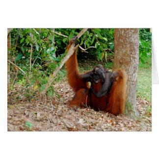 Cartão Kusasi, rei famoso do orangotango no acampamento