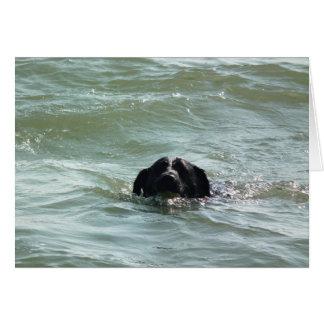 Cartão Labrador na natação
