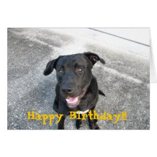 Cartão Labrador preto feliz